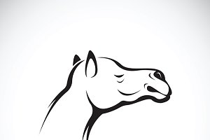 Vector of a camel head. Icon.