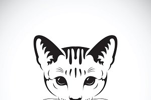 Vector of a cat face. Pet