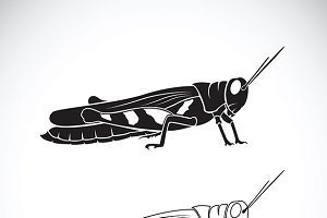 Vector of grasshopper.