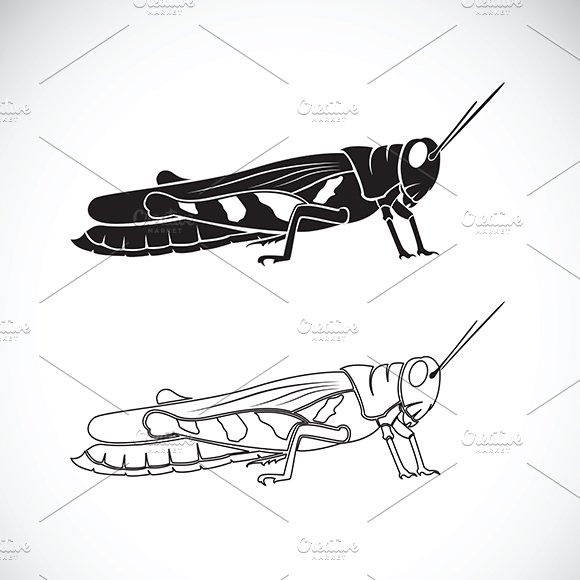 Vector Of Grasshopper