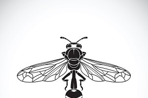 Vector of a wasp. Insect Animal