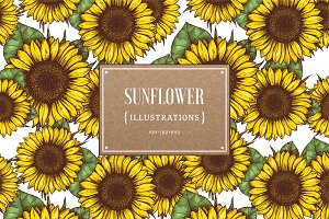 Sunflower illustrations