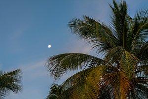 Morning Moon Over the Tropics