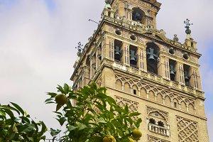 The Giralda of Seville and orange