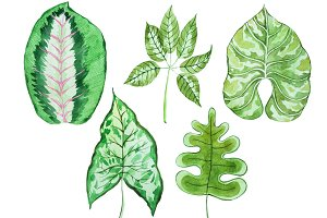 Watercolour set of tropical leaves of different shape hand-drawn on white paper