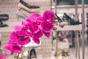 Flowers at shopping mall on a tropical Bali island, Indonesia.