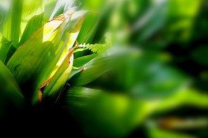 Rustic garden of green emotions