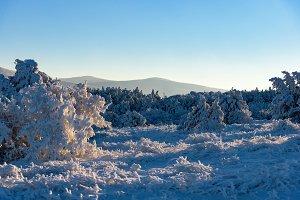 Winter sun rays fall on frozen tree