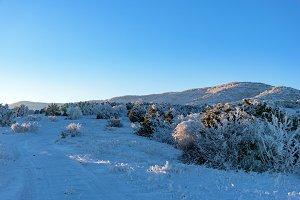Winter mountain sunset, frozen trees