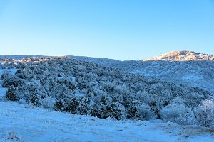 Snowy mountain with frozen trees