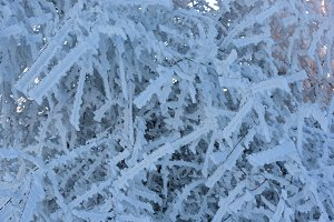 Frozen tree branches background