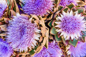 Blue artichoke flowers at the market