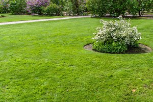 Green lawn and flower garden
