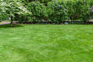 Green grass  lawn and garden
