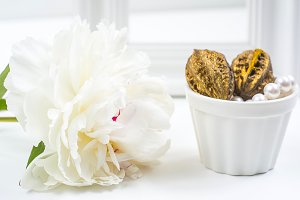 White peony with golden walnuts