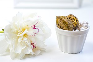 White peony and walnuts in cup