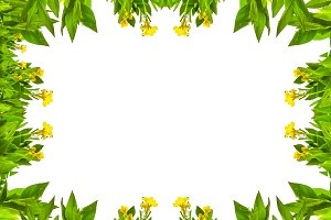 White Frame with Nature Borders
