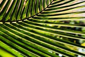 horizontal vivid vibrant green palm leaf bokeh background backdr