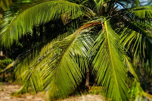 Horizontal vivid palm tree leaves bokeh background backdrop