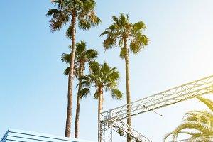 Beautiful Palms Sunny Beams Summer