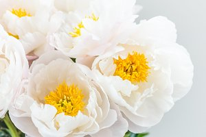 Beautiful bouquet of white Chinese peonies