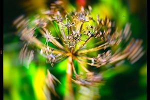 Horizontal vivid yellow nature plant closeup macro on green boke