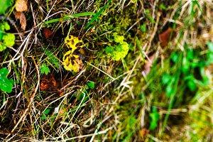 Horizontal vivid summer autumn grass closeup bokeh background ba