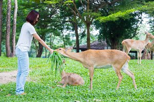 Woman give deer food