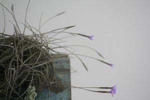 air plant nest