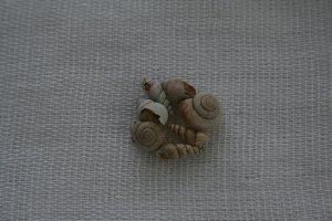 small empty shells