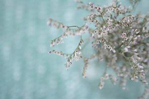 soft flowers