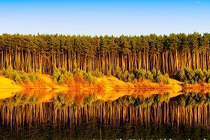Vertical vibrant wood forest river reflections landscape backgro
