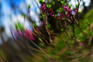Vertical purple flowers bokeh zoom abstraction