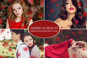 American Beauty- red petals overlay