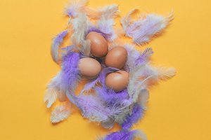eggs and purple feathers