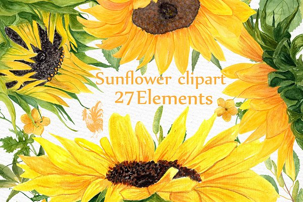 Sunflower Watercolor clipart
