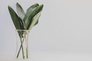 Vase of tropical leaves