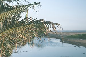 Palm and river on a tropical Bali island, Indonesia.