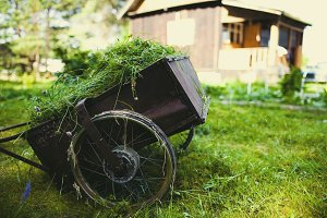 A wheelbarrow with mown grass against the backdrop of a village house