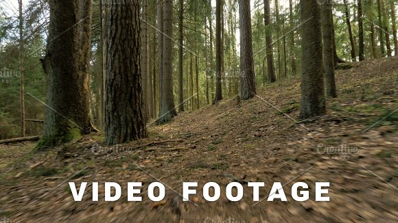 Pathway In The Forest Flying Camera Shot