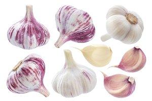 Garlic elements isolated on white background