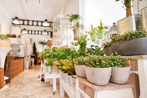 An Image of A Flower Shop With Green Plants