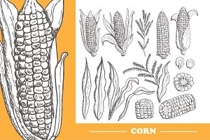 15 Hand Drawn Corn Elements