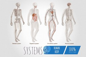 Systems Human Body Anatomy set