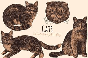 Set Cats. Vector engraving.