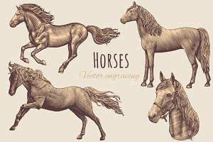 Set Horses. Vector engraving.