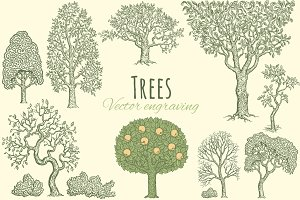 Set Trees. Vector engraving.