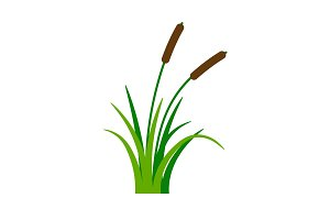 Bush bulrush with green grass