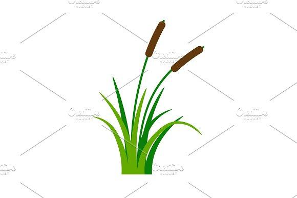 Bush Bulrush With Green Grass