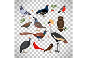 Birds icons on transparent background